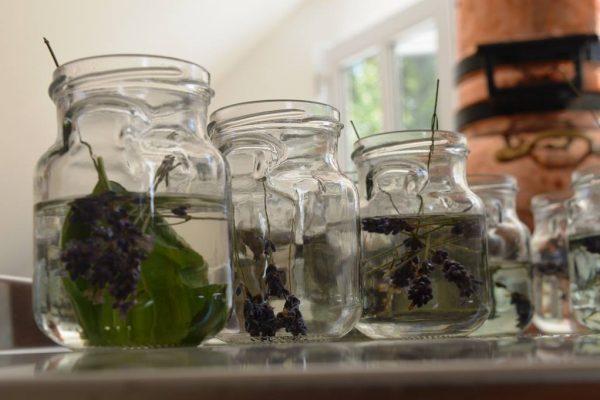 Plante medicinale sic civitas (2)